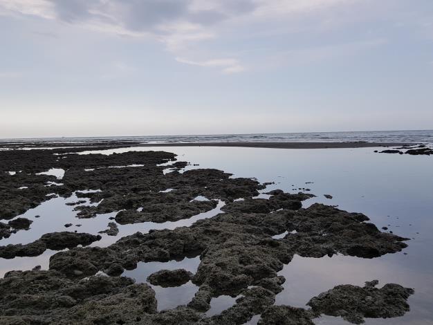 台灣中油:已依專案小組決議進行水下攝影  若發現柴山多杯孔珊瑚將不排除調整落墩位置及工法等