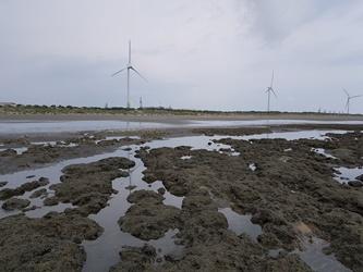 台灣中油公司︰已進行藻礁調查計畫,將積極配合桃市府進行保育工作