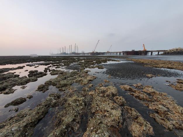 台灣中油:三接G1、G2藻礁生態未破壞 工業港水下不具藻礁生態