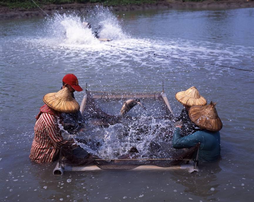 台灣中油協助石斑魚產業紓困致贈弱勢團體,讓愛傳出去!