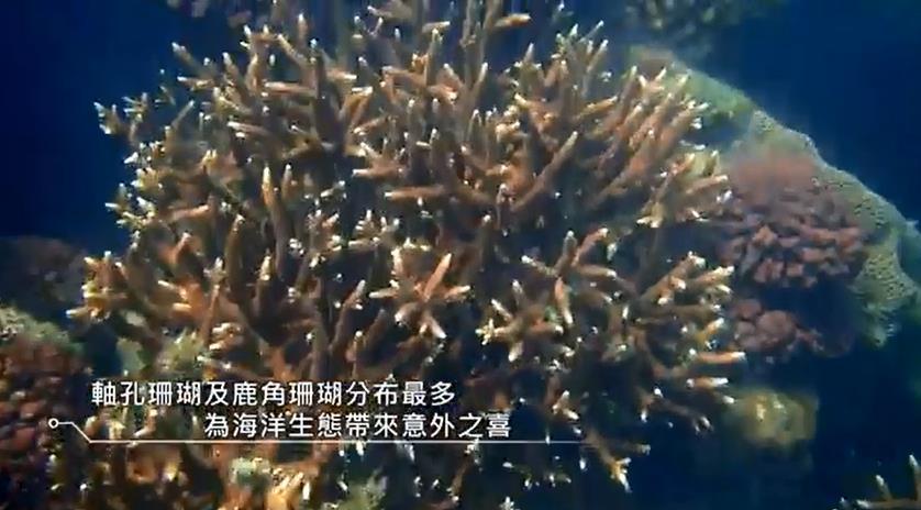 台灣中油股份有限公司永安液化天然氣廠珊瑚生態影片 30秒版